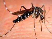 Las temidas picaduras de mosquito… ¡lo peor del verano!
