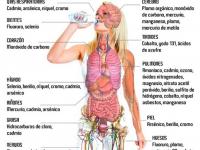 Metales pesados en el cuerpo. Cómo afectan y cómo eliminarlos